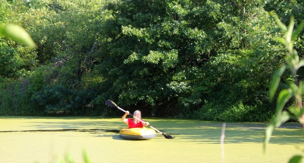 kayaking through duckweed pond