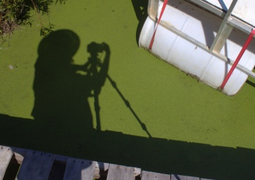 Sun Shadow on Duckweed