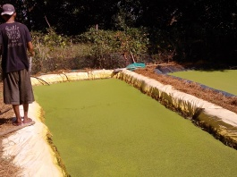 Duckweed Trial Pond